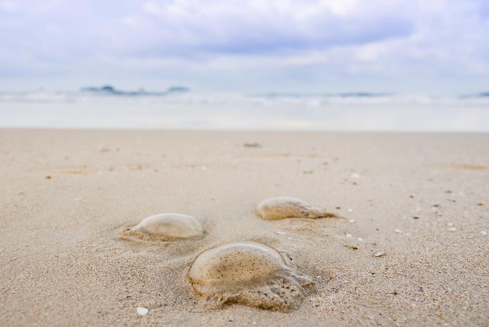 Τσιμπήματα από θαλάσσια όντα